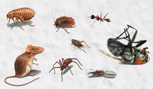 Kiểm soát côn trùng